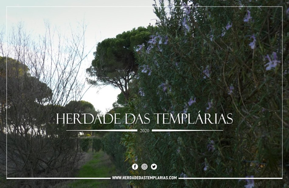 herdade-das-templarias
